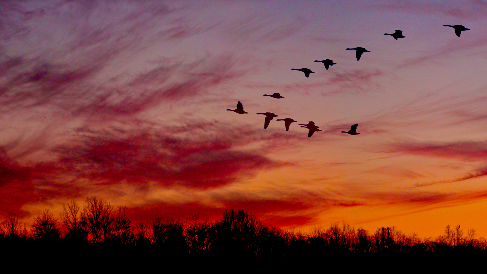 Geese and sunset at Sharon Woods