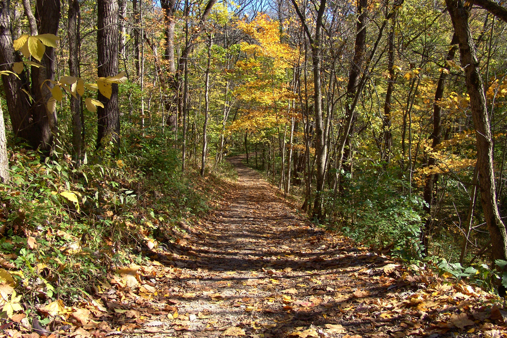 View along the Terrace Trail at Battelle Darby Creek, in fall