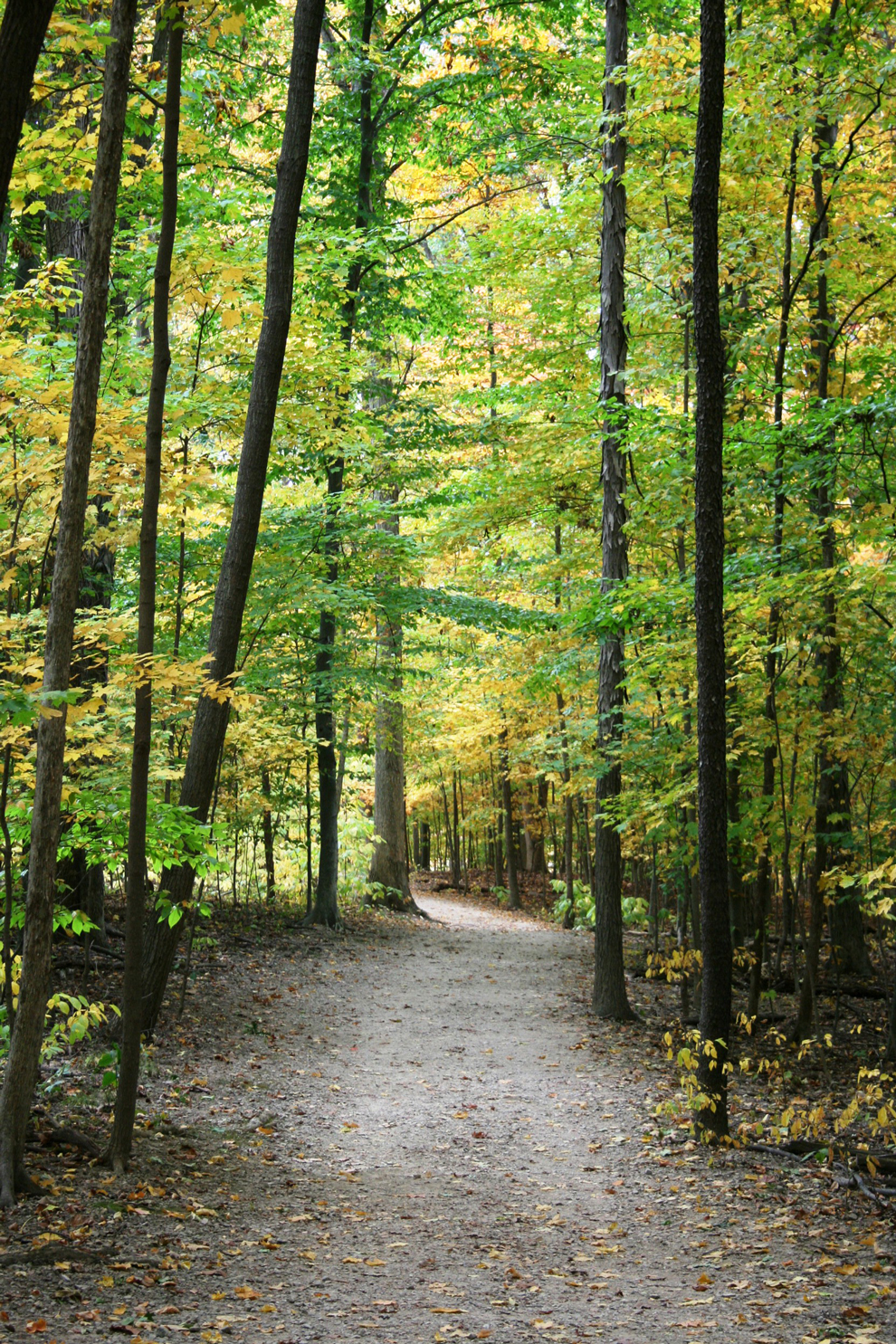 View along the Overlooik Trail at Highbanks Metro Park, October