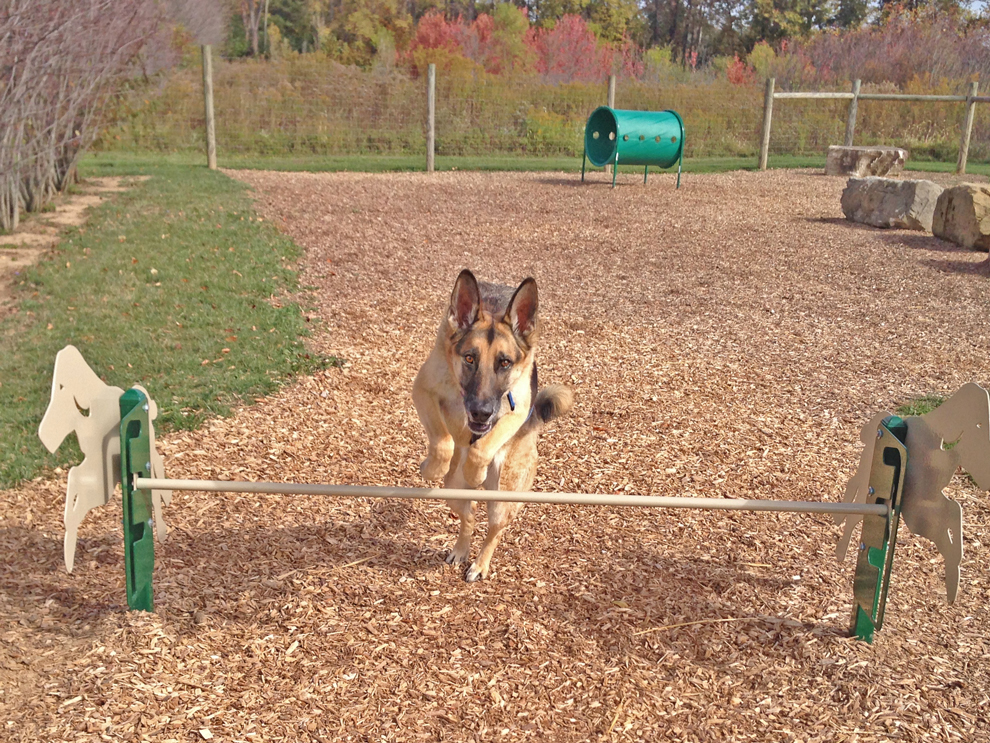 A dog leaps over the rail at Walnut Woods Metro Park's dog park obstacle course.