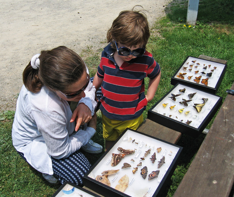 Family looking at insect collection at Slate Run.
